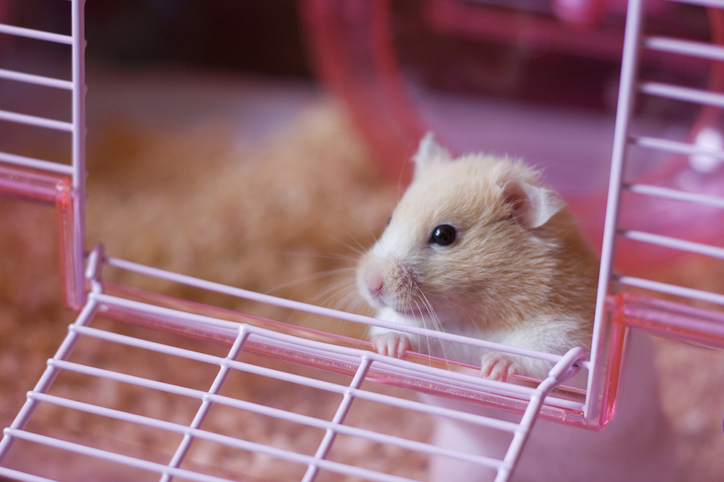 Choosing a hamster cage